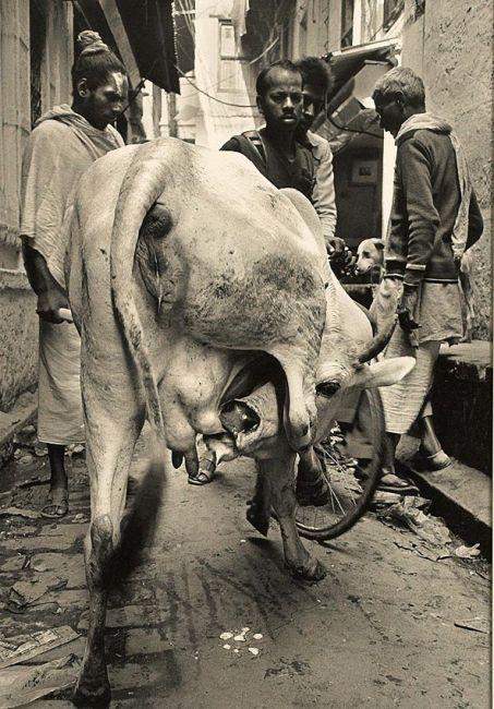 Liikenneruuhka vanhassa Varanasissa 1988,© Martti Anttila